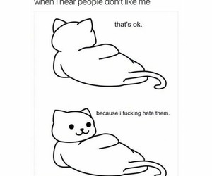 cat, funny, and haters image