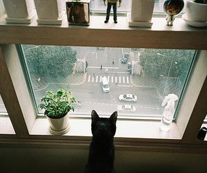 cat, window, and street image