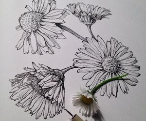 draw and flowers image