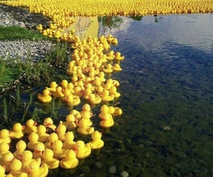 duck, lake, and yellow image