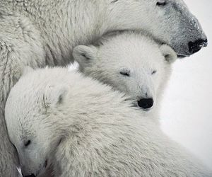 bear, Polar Bear, and animal image
