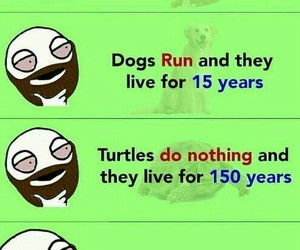 fact, lol, and funny image