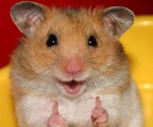 hamster, animal, and smile image