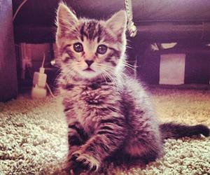 cats, tabby cats, and furbbies image