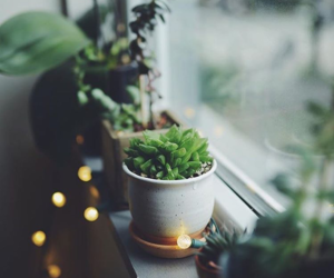 cozy, home, and plant image
