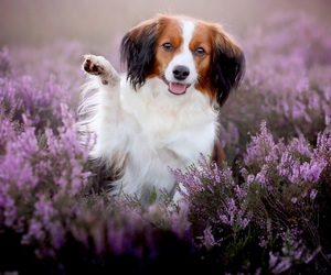 adorable, field, and flowers image