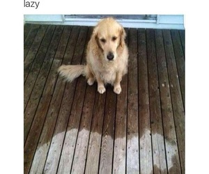 dog, rain, and funny image