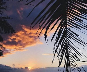 sky, palm tree, and beach image
