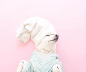 cachorro, cao, and dog image
