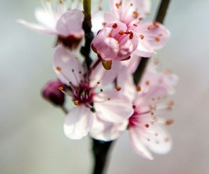 beauty, spring, and flower image