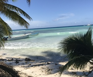 beach, Dominican Republic, and palmtree image