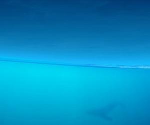 aquatic life, blue, and dark blue image