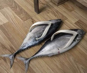 fish, funny, and shoes image