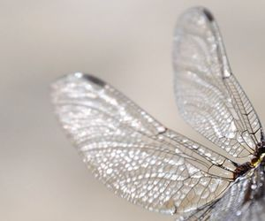 fairy and wings image
