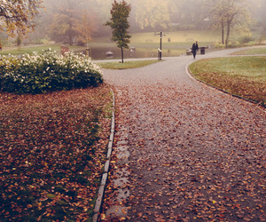 autumn, path, and fog image