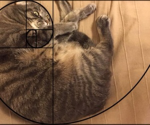 cat, golden section, and geometry image