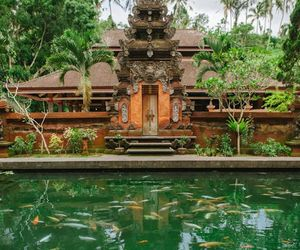 bali, gold fish, and indonesia image