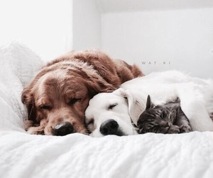 adorable, cat, and dogs image