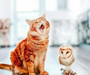 animal, ginger, and cat image