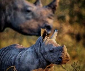 animal and rhino image