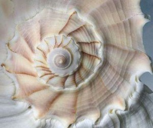 shell and spiral image