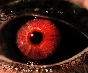 eyes, eye, and theme image