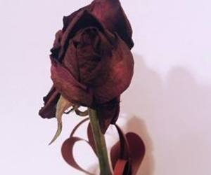 mine, photography, and roses image