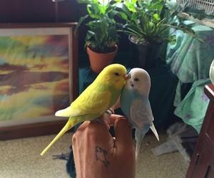 bird, animal, and pet image