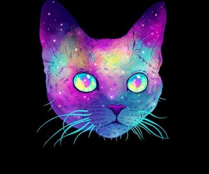 black, cat, and colorful image
