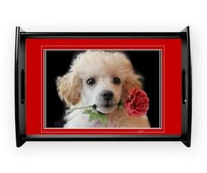 animal, valentine, and homedecor image