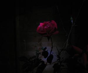 rose and dark image