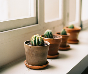 cactus, plants, and indie image