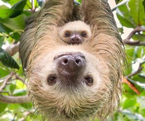 sloth, animals, and baby image
