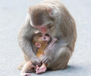 apes, baby animals, and cute animals image