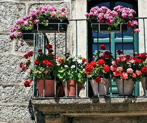 balcony and flower image