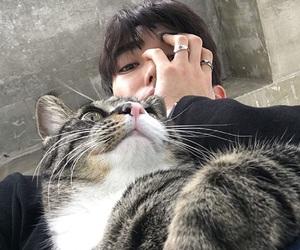 cat, boy, and korean image