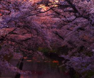 nature, beautiful, and sunset image
