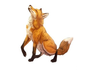 draw, drawings, and fox image