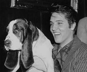 Elvis Presley, dog, and love image
