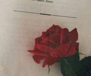 rose, dance, and red image