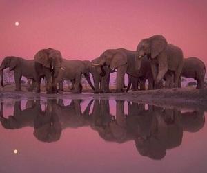 elephant, animal, and pink image