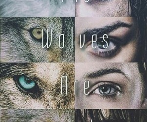 wolf, stark, and game of thrones image