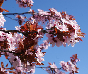baby pink, blossom, and blue image