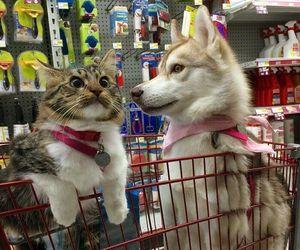 animal, dog, and cat image