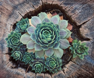 plants, succulent, and wood image
