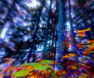 drugs, tree, and forest image