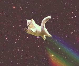 cat, rainbow, and space image
