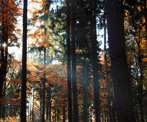 forest, tree, and autumn image