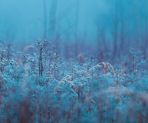 beauty, blue, and field image