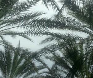 bluetooth, Miami, and palms image